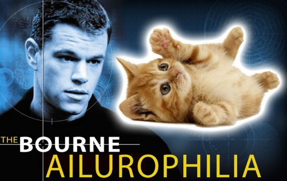 Jason Bourne stares wistfully at an adorable kitten.