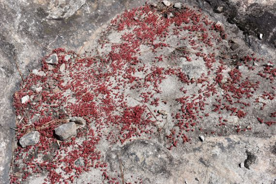 a wide shot of odd red plants inside a rocky crater