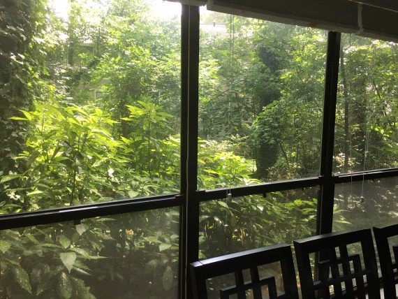 View of a forest through three tall windows